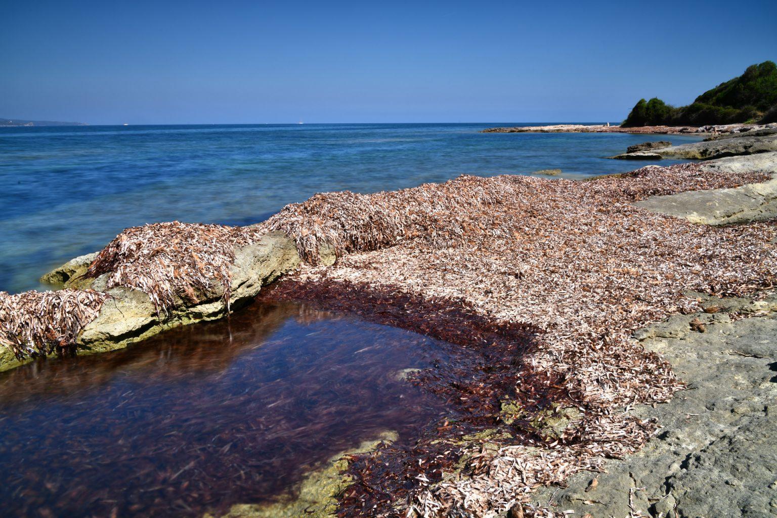 Bio-Reciclados - Algas 'Posidonia' recogidas de las playas mediterráneas.