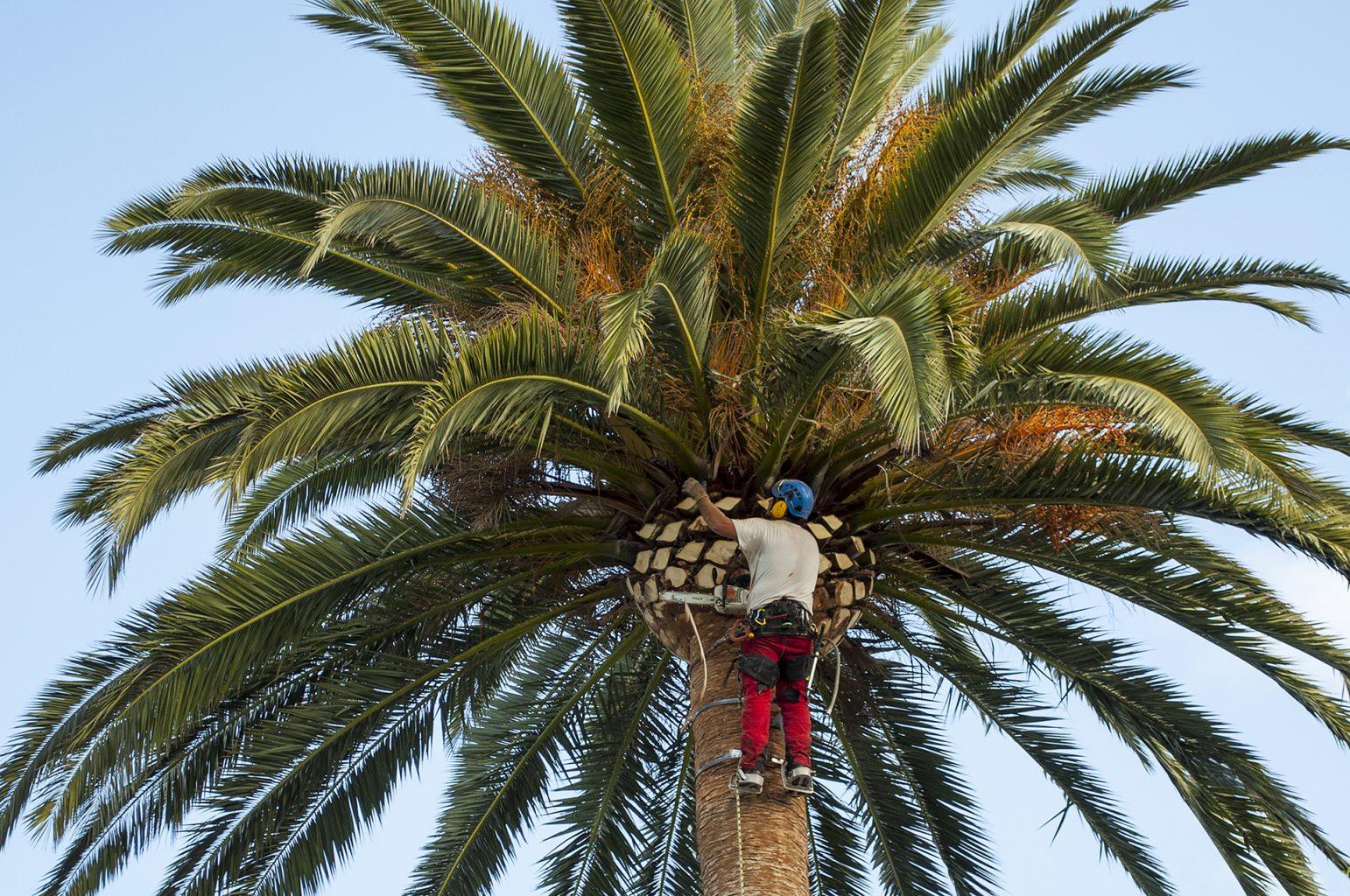 Bio-Reciclados - Fibra de la poda de las palmeras.